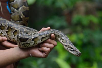 Толкование действий со змеями во сне