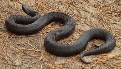 Разные виды змей по сонникам фото