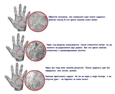 Главные линии на ладони и их значения фото