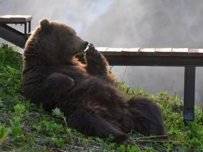 Медведь во сне в разных сонниках